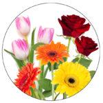 kvetiny-800x800-00-k2