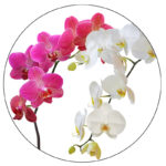 kvetiny-800x800-01-k2